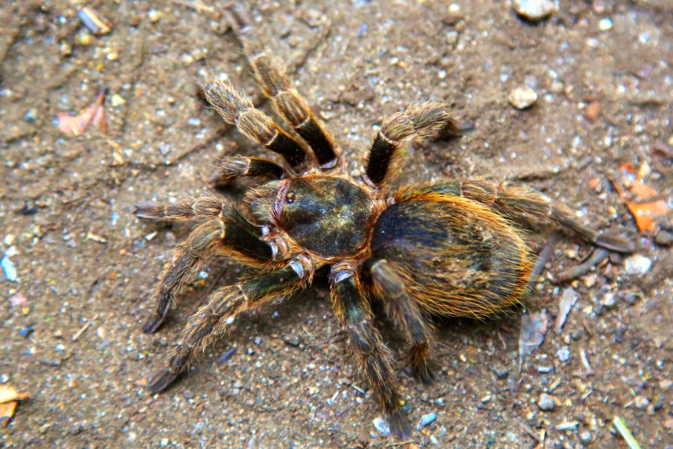 Unfortunately, these were also all over our campsite. When I see them I have to just walk away, they make me almost faint with fear. I don't want to kill them, but I also just want to pretend that spiders that big and hairy don't really live on this planet.