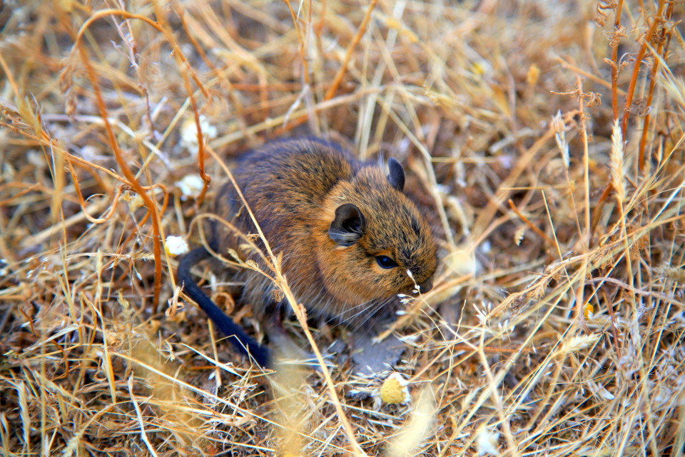 These little rodents were running all over our camp site and I could not get enough of them. They were crazy cute.