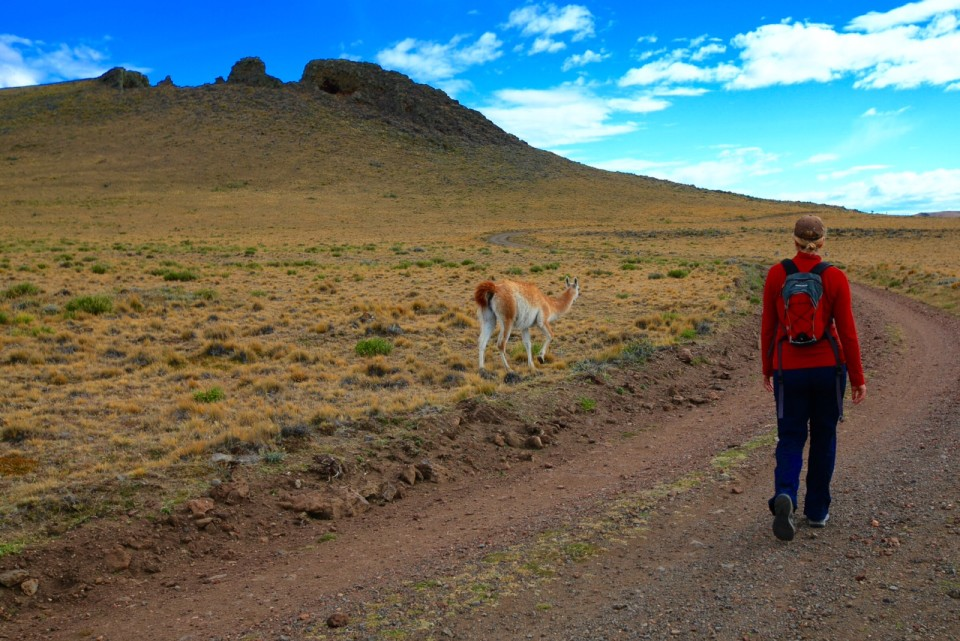 The guanacos were not scared of me at all. Having no people in the park (aside from us) kept the wildlife from being scared off.