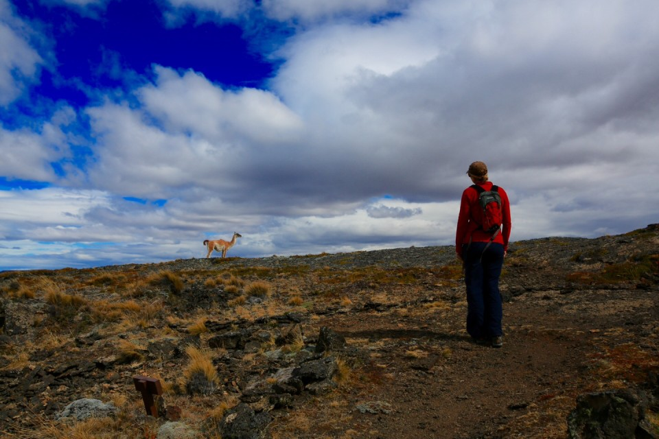 Another guanaco shadowing us on the hike.