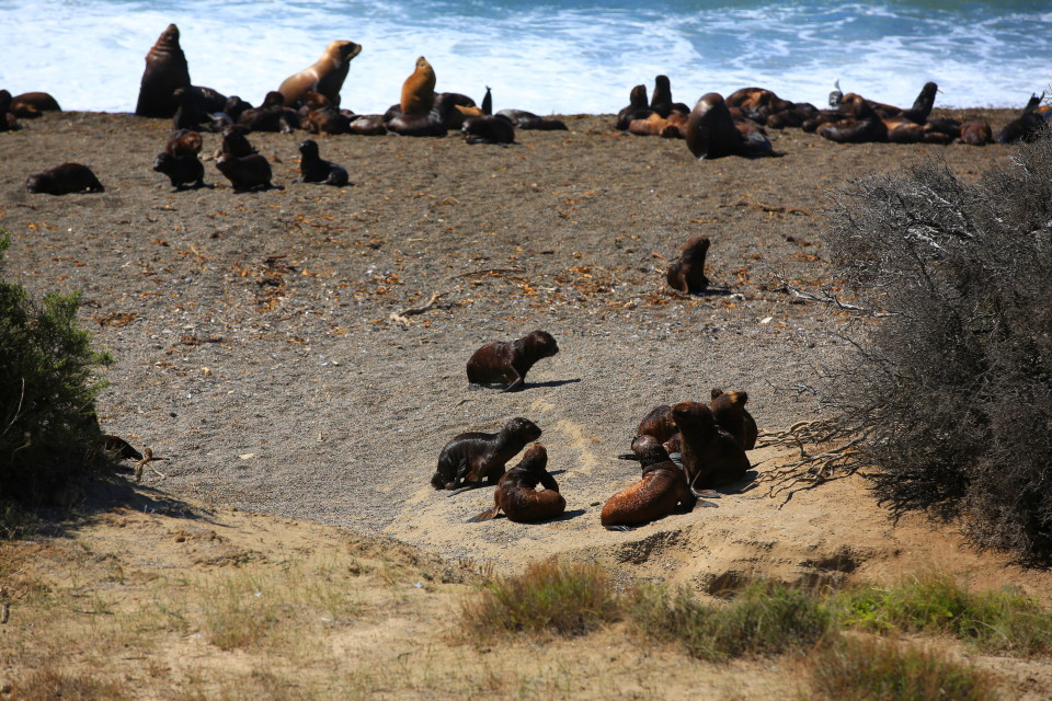 "The baby sea lions would all hang out in what Sam called ""the nursery""."